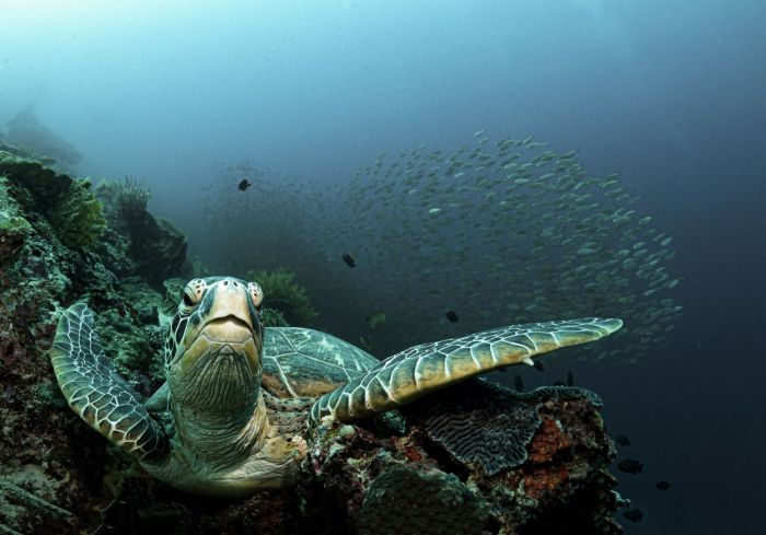 Relaxed Turtle